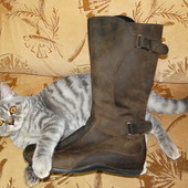 Демисезонные, мегаудобные, кожаные сапоги Steve Madden, Сша, размер 38 на низком ходу