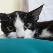 Здоровая котенок девочка