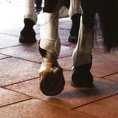 Резиновое покрытие +для спортивных площадок,резиновая плитка 500 х500 мм