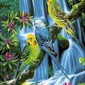 Картина по номерам Turbo Волнистые попугайчики VK127