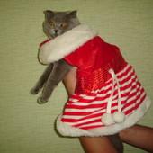 Новогодний наряд для котика, собаки среднего размера
