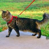 Поводок и ошейник для кота, хорька, кролика-голубой