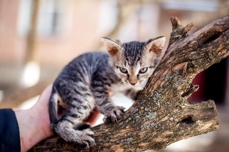 Котенок, мальчик 1,5 месяца только в хорошие руки фото №1