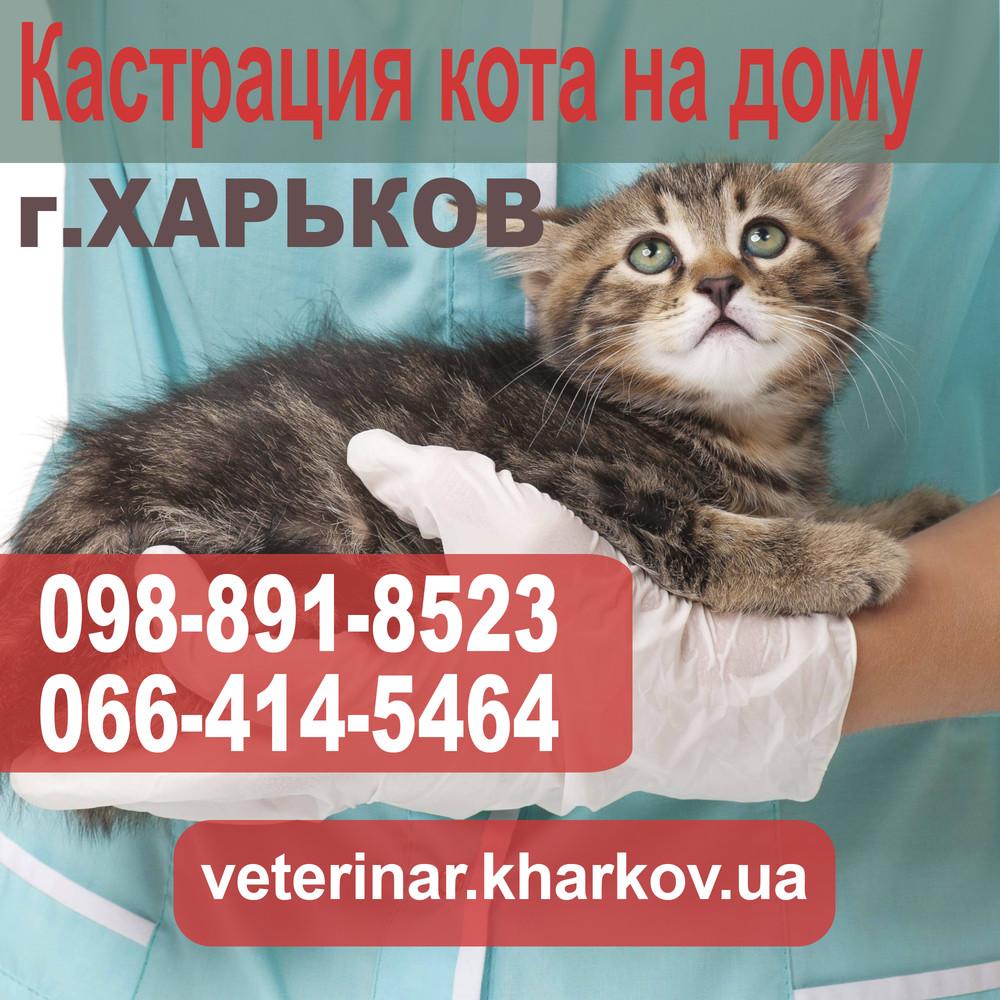 Кастрация кота на дому в Харькове - 550 грн. фото №1