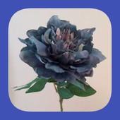 Сине-пепельный.Крупные семена Древовидного пиона
