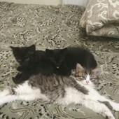 Отдам котят в хорошие руки Измаил