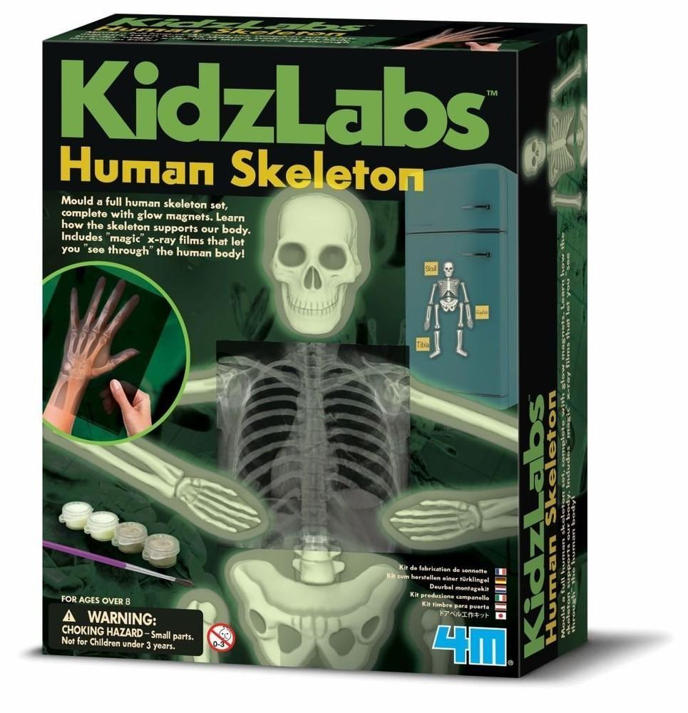 Научный набор светящийся человеческий скелет (сша) фото №1