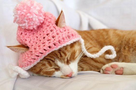 Шапка для кошки и котика фото №1
