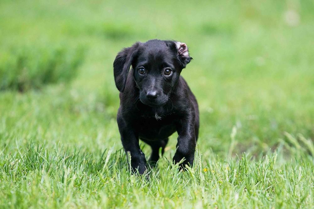 Отдам в хорошие руки щенка девочку женни фото №1