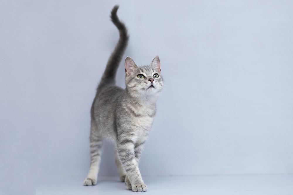 Отдам в хорошие руки котика подростка кая фото №1